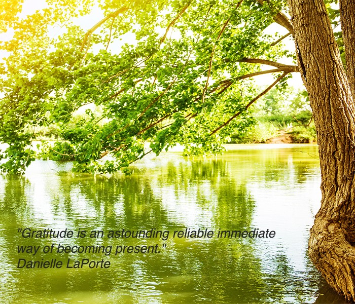 Beautiful river landscape, reflection of big tree in calm water,